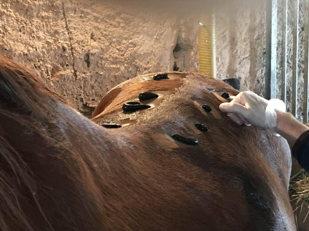 Sandrine Manuguerra ou comment soigner son cheval
