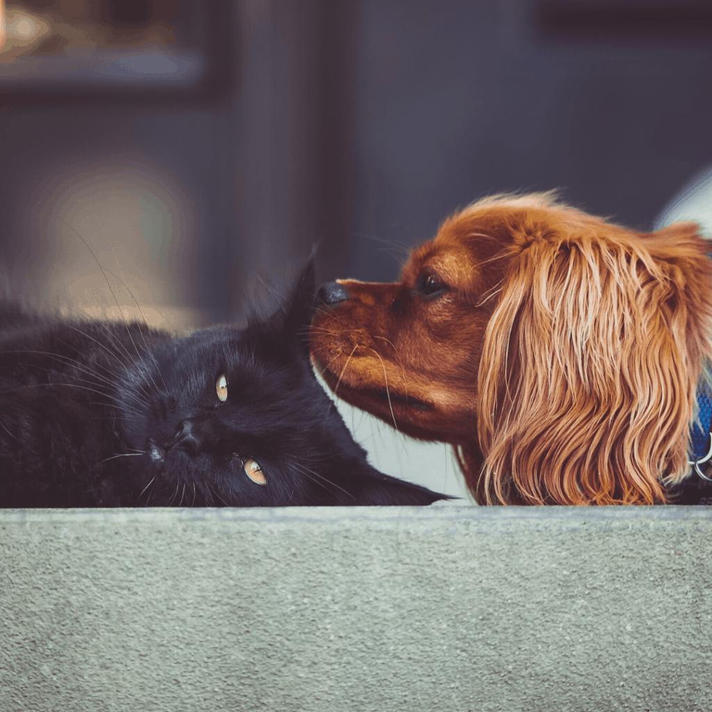 Attention aux tiques pour nos animaux