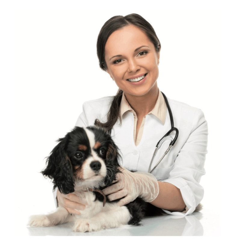 Mon animal chez le vétérinaire