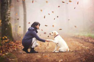 Florence Champagne comportementaliste canin. les bonnes attitudes à adopter lors de nos promenades avec nos chiens