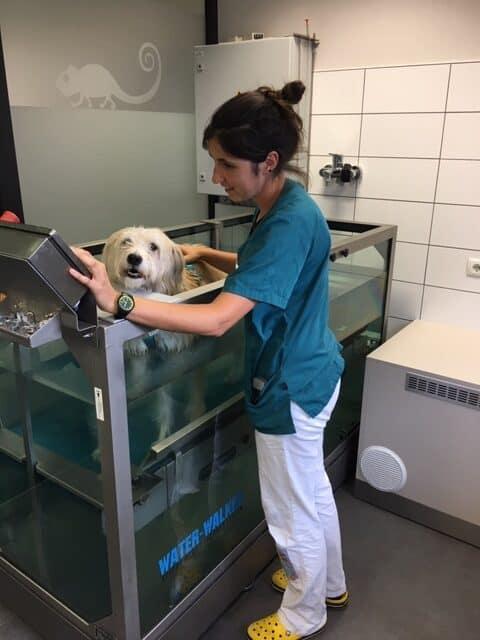soins adaptés pour les animaux