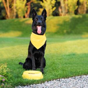 Mon chien porte un foulard jaune